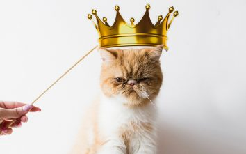 Cat with a crown - side hustle
