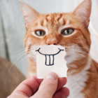 person holding up a piece of paper in front of a cat to make it look like the cat has buck teeth